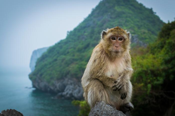 Kết quả hình ảnh cho đảo khỉ cát bà