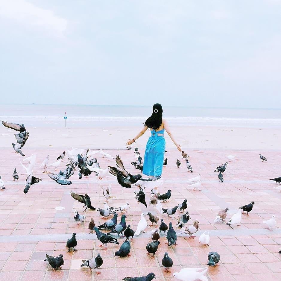 Công viên Biển Đông với những đàn chim hải âu cực đẹp để chụp ảnh