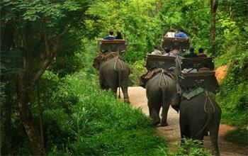 Trải nghiệm cưỡi voi tại Pattaya