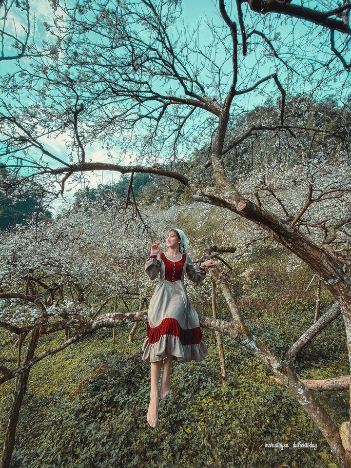 Kết quả hình ảnh cho chụp ảnh ở rừng hoa mận