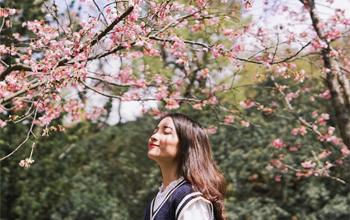 Thưởng hoa anh đào ở công viên Yangmingshan