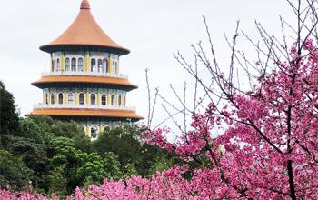 Hòa mình với vẻ đẹp của hoa anh đào ở Thiên Nguyên Cung