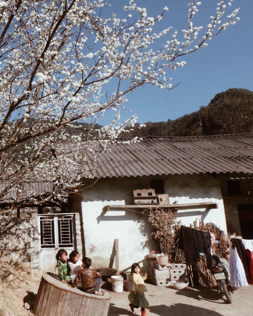Tết ở Hà Giang đến là khi những bông hoa đào, hoa mận bắt đầu nở bung rực rỡ trên núi rừng
